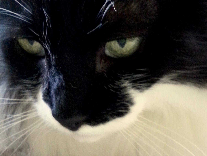 Zander a cat