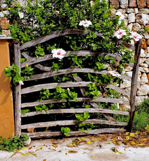 An olivewood gate with flowers