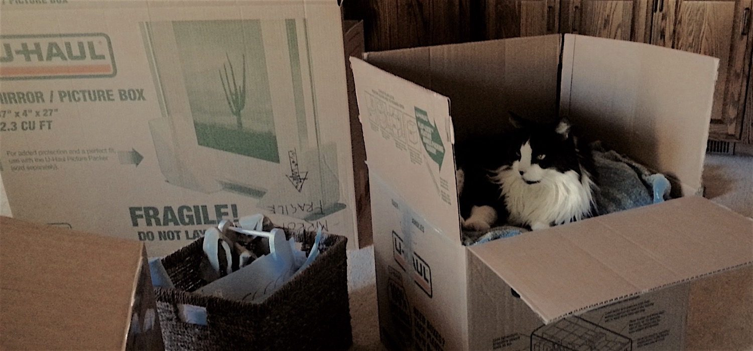 Cat in box on moving day