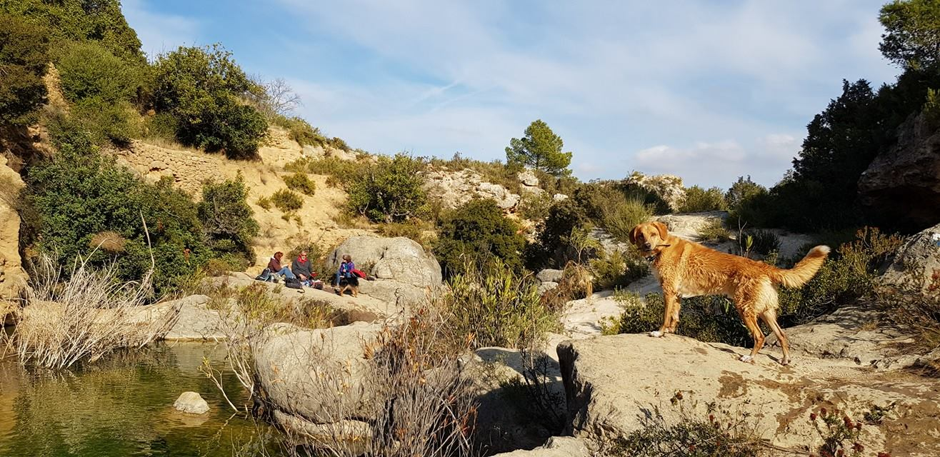 Day Hikes with Dogs near Valencia