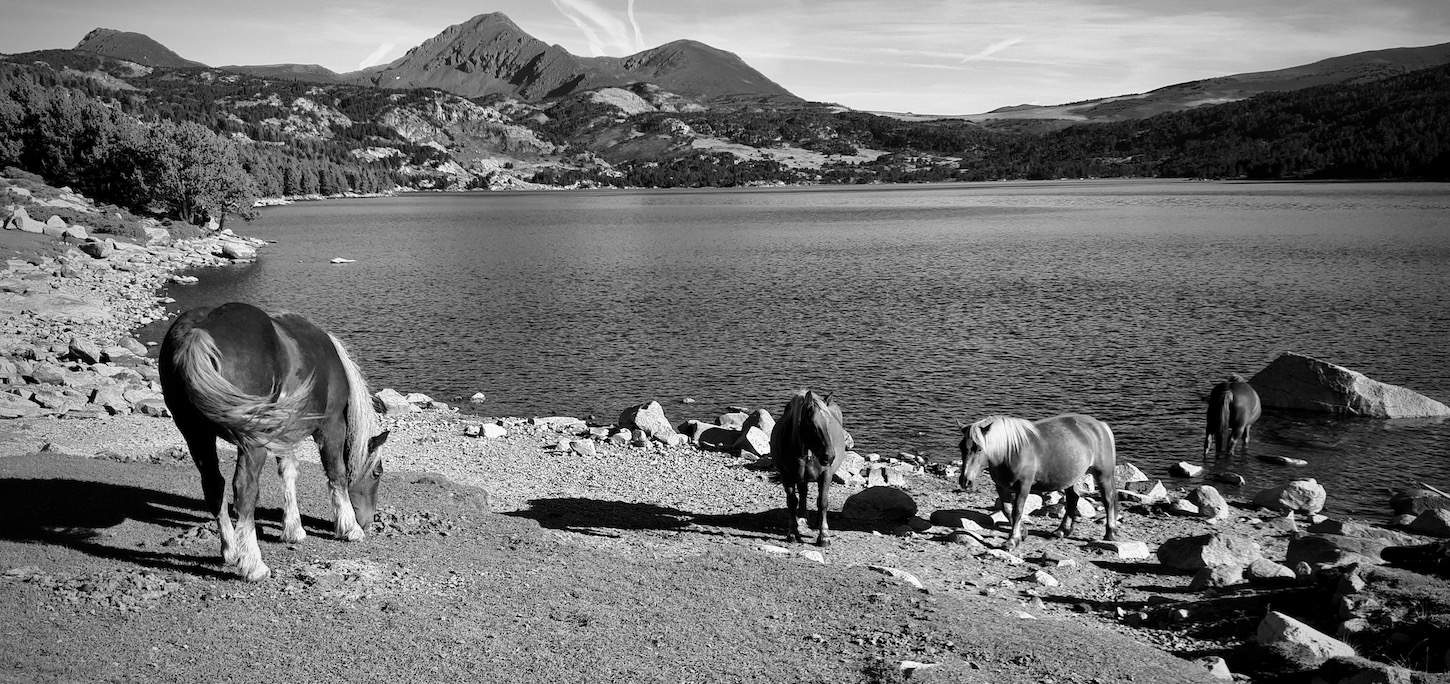 Horses watering at a lake in the Pyrenees