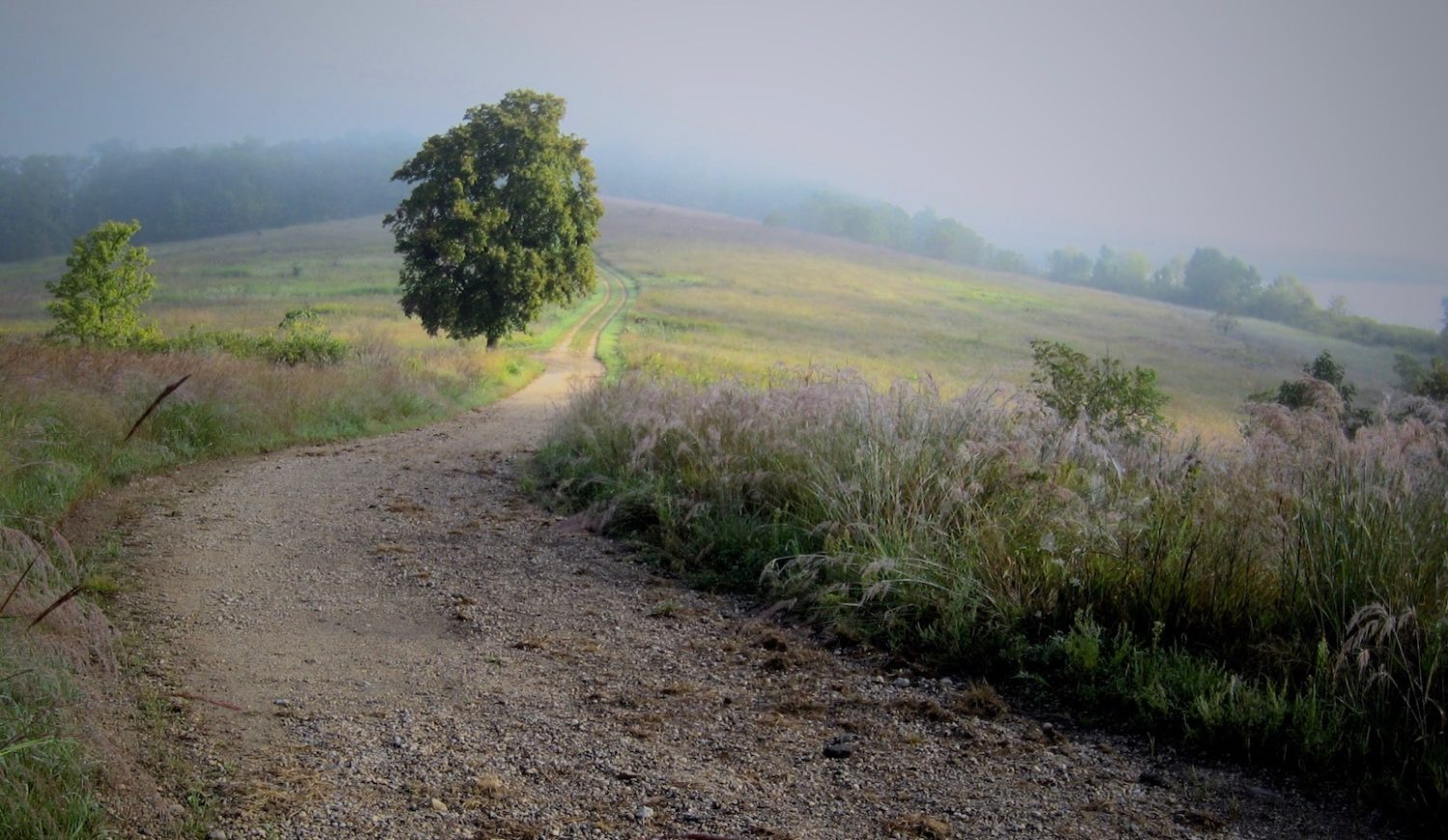 Gravel road winds down hill past a large tree and into the fog