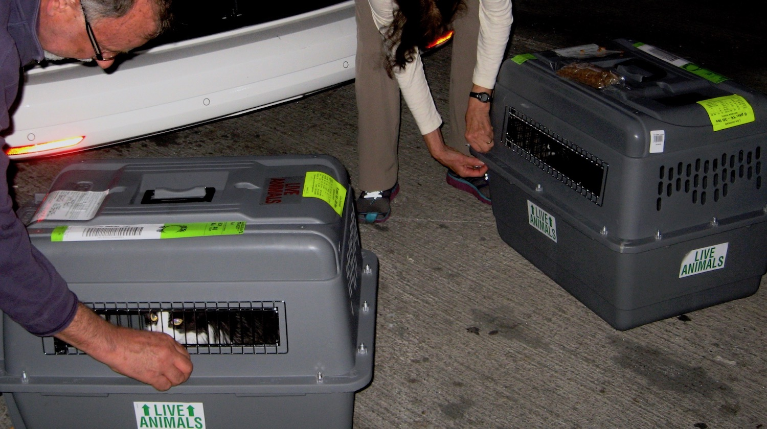 "Featured image for ""Will Your Pets Travel as Cargo, Carry-on or Checked Baggage?"""