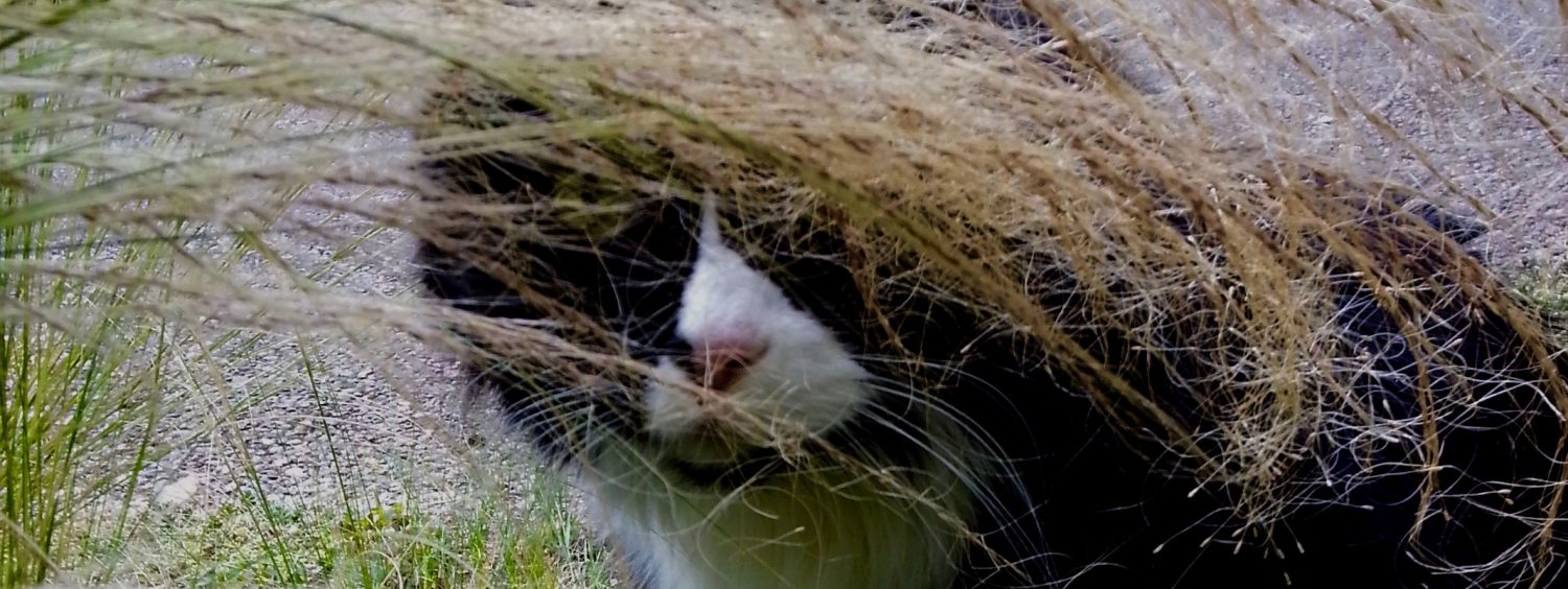 Cat peeking through tall grass