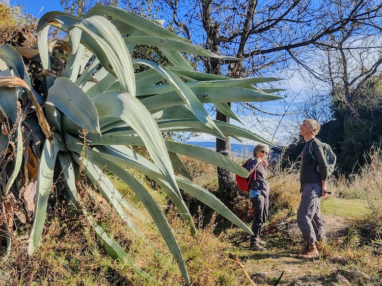 "Featured image for ""Exploring the Mid-Alpujarra on Foot"""